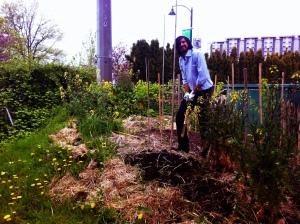 garden in Arj