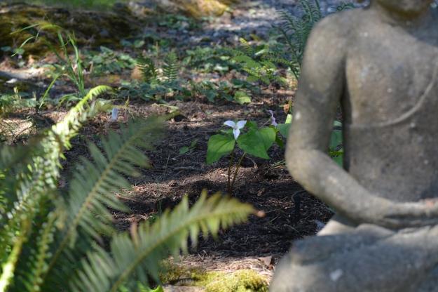 trilliums sword ferns buddha